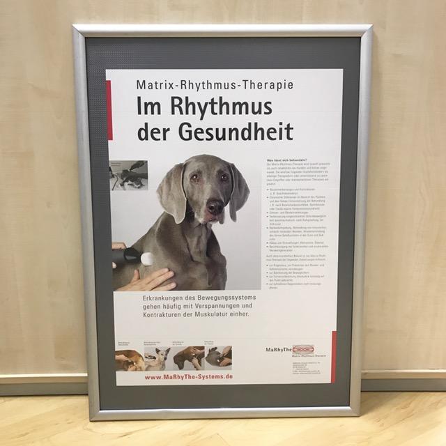 Postervorschau MaRhyThe Behandlung Hund