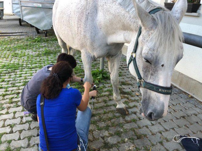 Übungsstation Pferd