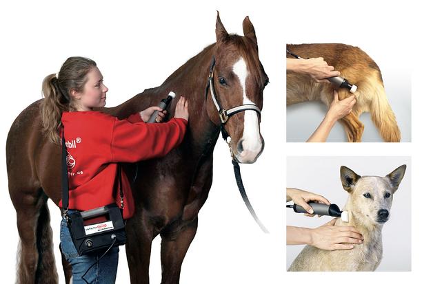 Behandlung von Pferd und Hund mit dem Matrixmobil